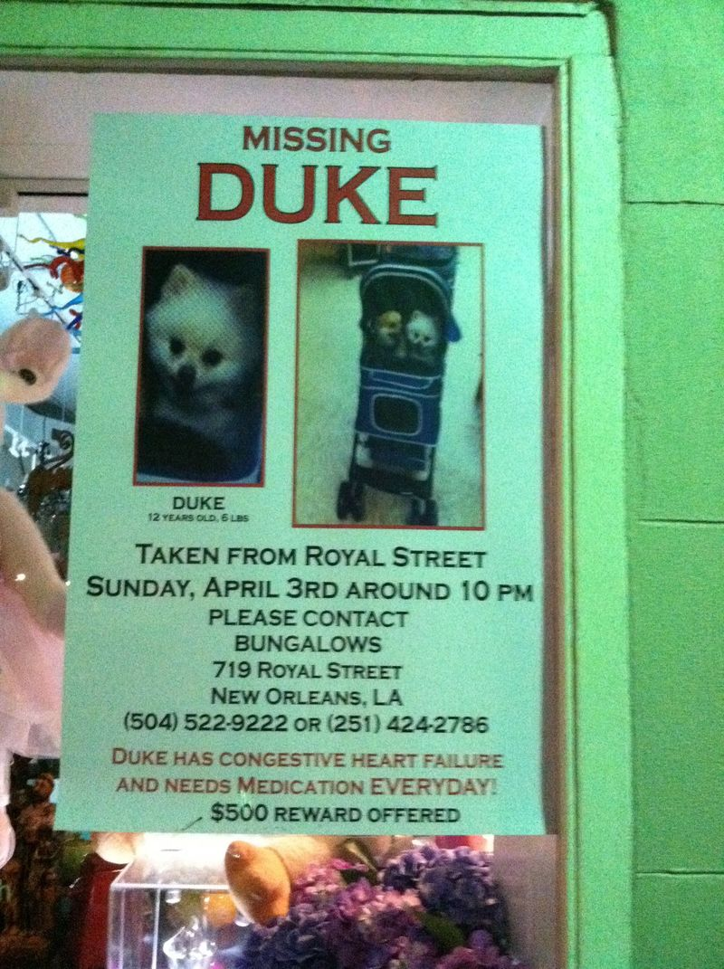 Nola-duke-is-missing