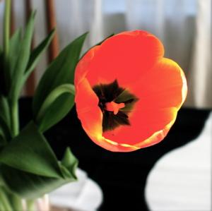 Tuliptwo